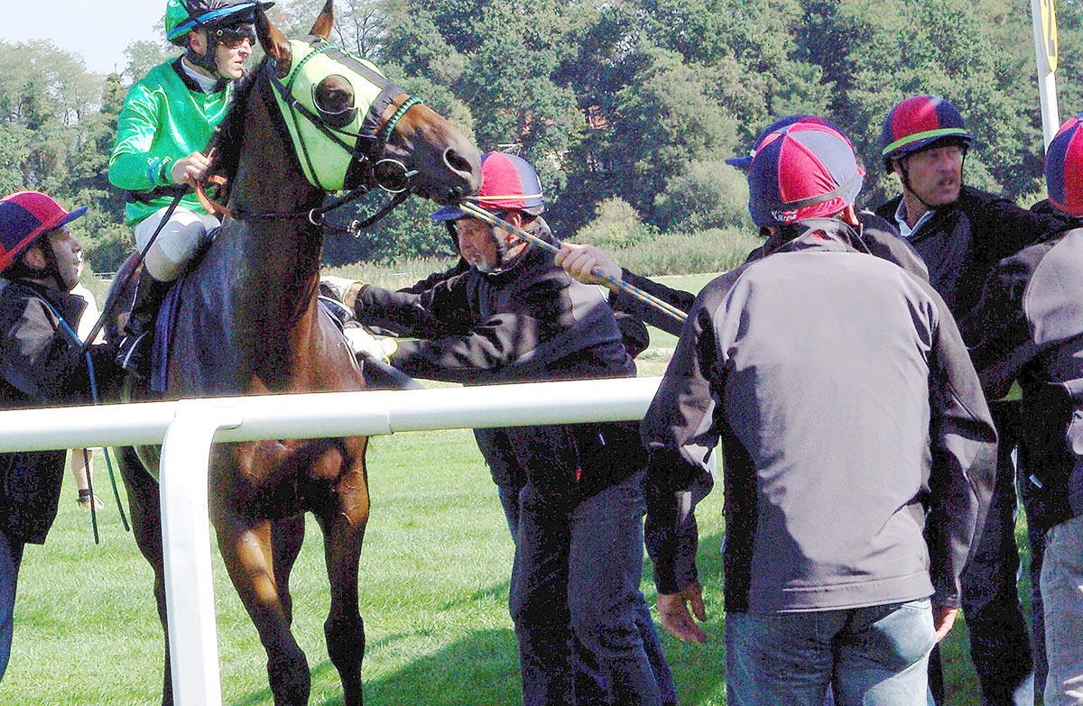 Race day activity: Handlers forcing a thoroughbred into the starting gate