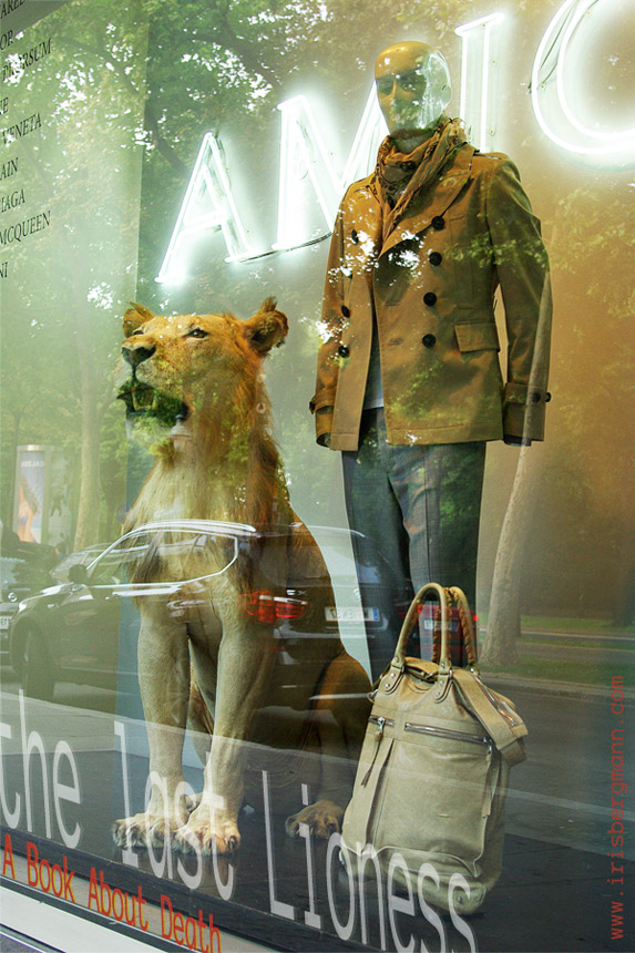 The Last Lioness. A Book about death. Photograph of two dummies - a lioness and a male mannequin with bags in safari colours, window display of a designer fashion store in Vienna, with reflections of the street, cars, advertising display.